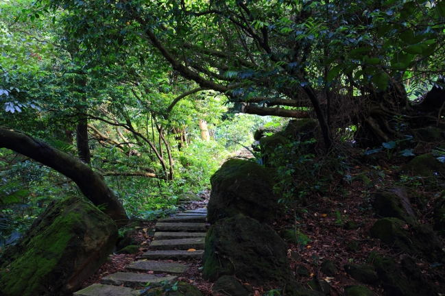 Mountain path for walking meditation at the Tiannan Temple (天南寺)